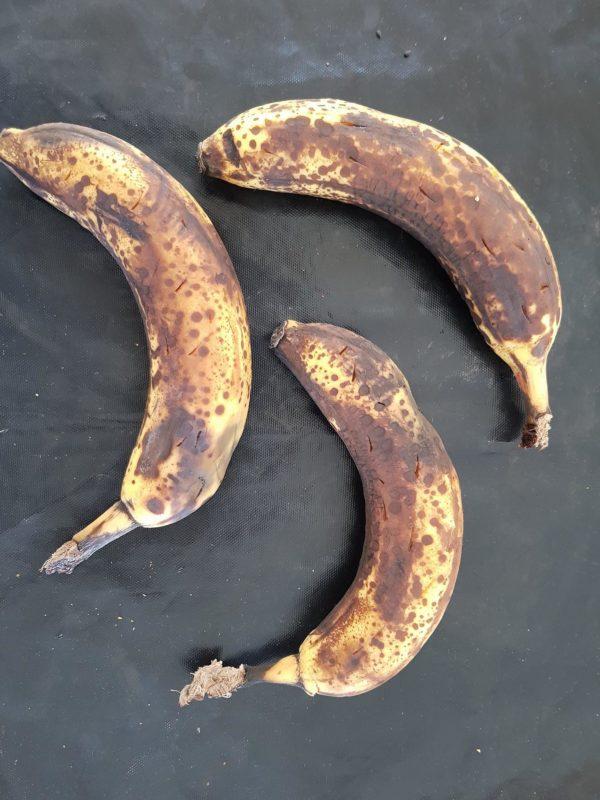 Perforez vos bananes très mûres à l'aide d'un couteau avant de les enfourner pendant 20 minutes à 200°C. Vous pouvez placer vos bananes dans un moule, le sucre des bananes risquant de couler des trous pendant la cuisson.